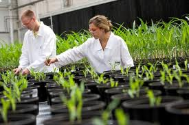 Scientists working on engineering flood tolerant crops.